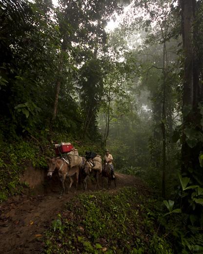 Cavalli nella foresta