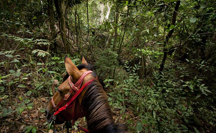 A cavallo nella foresta