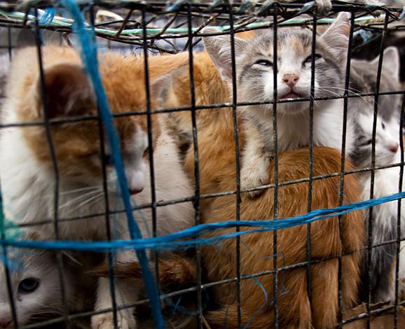 Gatti in gabbia