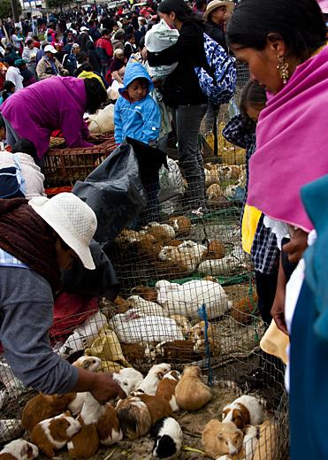 Mercato animali, Ecuador