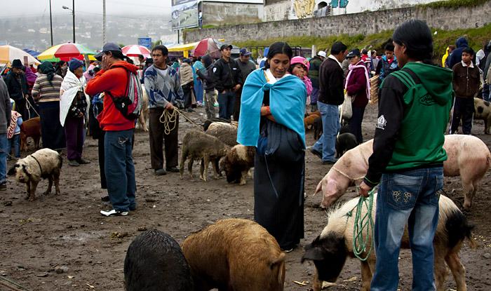 Mercato degli animali a Otavalo