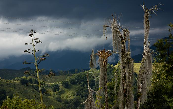 Pianta strana, Colombia