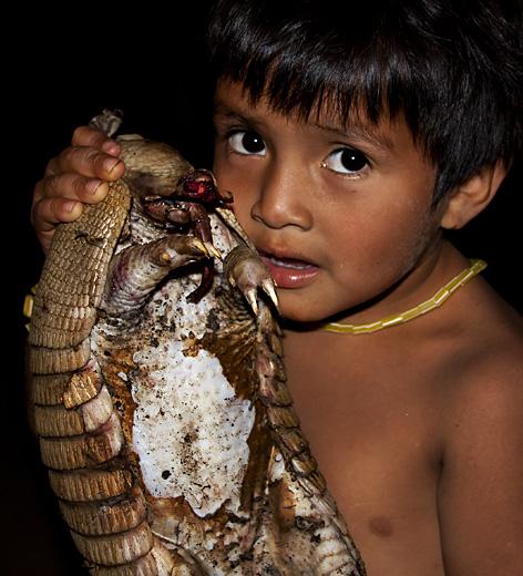 Armadillo, Amazzonia