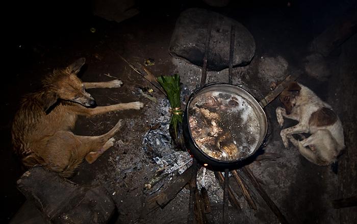 Cani attorno al fuoco