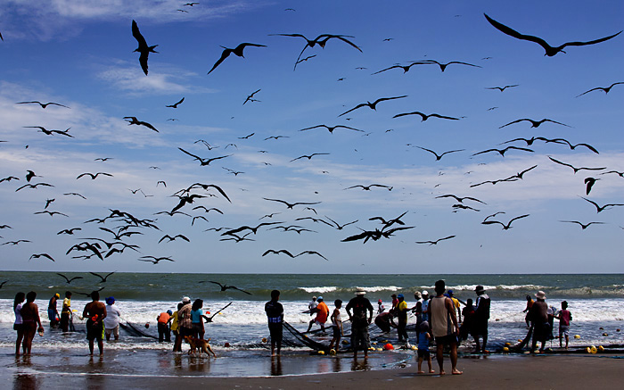 Uccelli sulla spiaggia, Ecuador