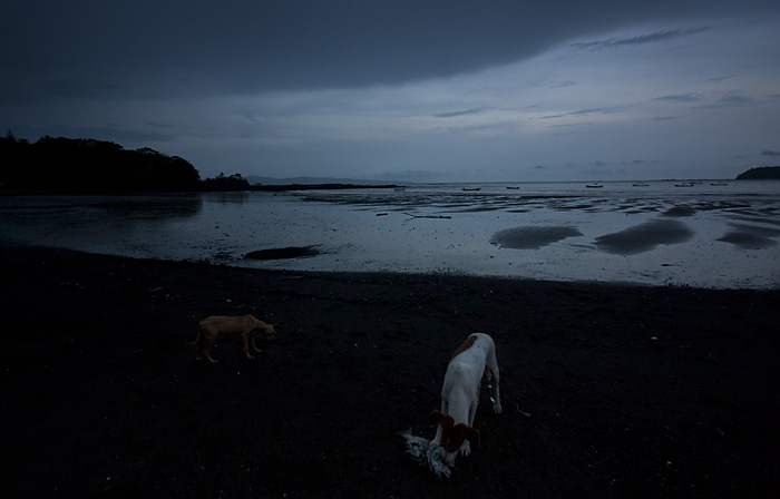 Cani sulla spiaggia di sera, Panama
