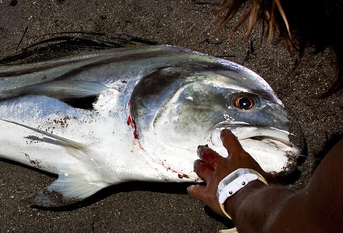 Pesce ucciso, Costa Rica