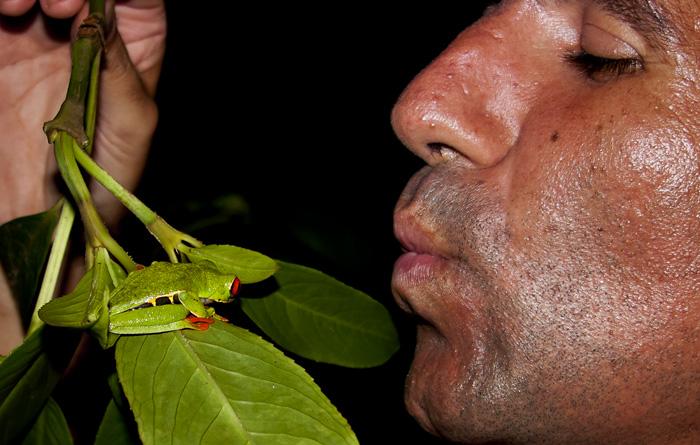Io bacio rana, Costa Rica