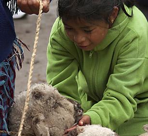 Bambina e pecorella, Ecuador